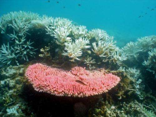 Reefs around the world are under threat from bleaching due to climate change