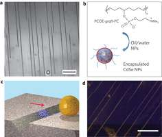 Research teams develop rolling microcapsules to repair micro-sized defects in surfaces