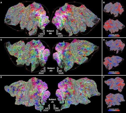 Study reveals how the brain categorizes thousands of objects and actions