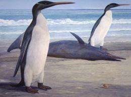 Scientists get first full look at prehistoric New Zealand penguin