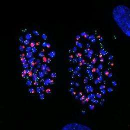 Sending out an SOS: How telomeres incriminate cells that can't divide