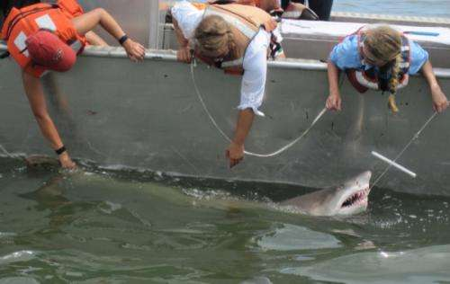 Shark migrations studied with underwater robot along Delmarva Peninsula