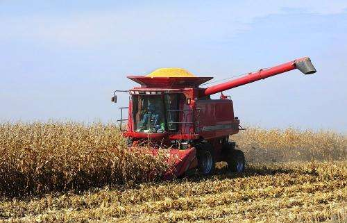 Signs for optimism as harvest reaches peak in Iowa