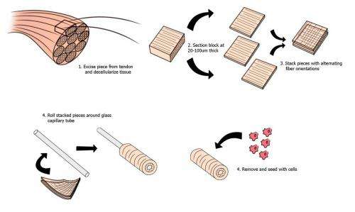 Slice, stack, and roll: A new way to build collagen scaffolds