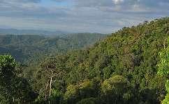 Soil sets Congo tree mix