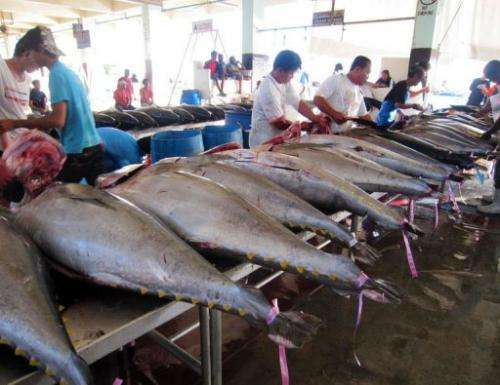 Some tuna varieties are overfished while others are near their limits, experts said