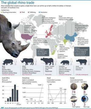 South Africa is home to about three quarters of Africa's 20,000 white rhinos and 4,800 black rhinos.