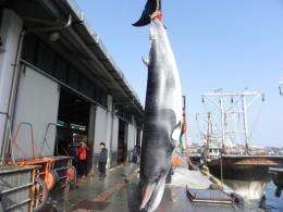 "South Korea said Wednesday it may scrap its fiercely criticised plan to resume ""scientific"" whaling"