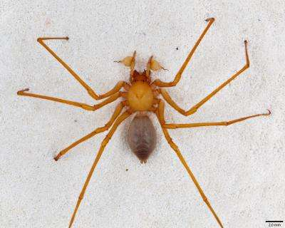 Spider version of Bigfoot emerges from caves in the Pacific Northwest
