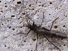 Stoneflies mapped across Ohio, with implications for water quality and nature conservation