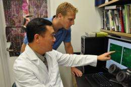 Stony brook study shows ultrasound triggers bone cell mobility
