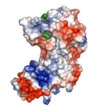 Structure discovered for promising tuberculosis drug target