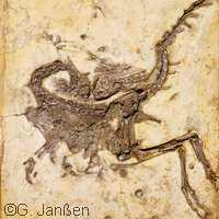 Study finds decomposition responsible for fossilised deformations