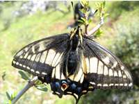 Study finds that mild winters are detrimental to butterflies