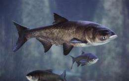 Supreme Court rejects emergency carp measures (AP)