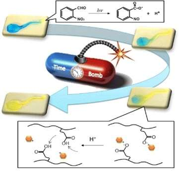 Targeting drugs with hydrogels [research]