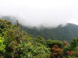 Team finds natural reasons behind nitrogen-rich forests