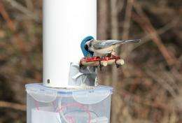 Technology tracks birds visiting feeders