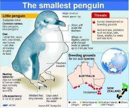 The Little Penguin, also known as the Fairy Penguin, is the world's smallest penguin species