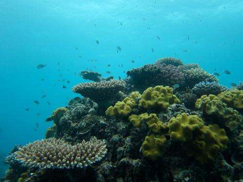 The 'slippery slope to slime': Overgrown algae causing coral reef declines