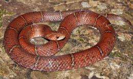 The snake has been named the Cambodian Kukri, conservation group Fauna and Flora International said