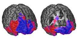 Thinking and choosing in the brain