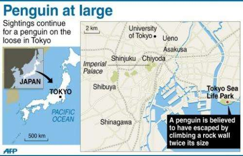 Tokyo Penguin at large