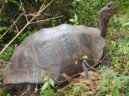 Tortoise species thought to be extinct still lives, genetic analysis reveals