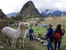 Tourists watch llamas at the ruins of Machu Pichu in Cuzco