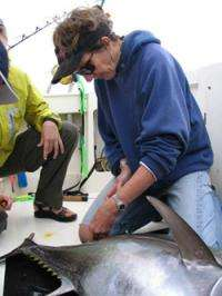 Track Atlantic bluefin tuna to learn migration, habitat secrets