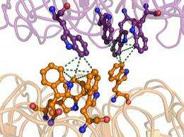 Ultraviolet protection molecule in plants yields its secrets to Scripps research team