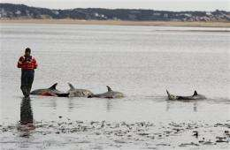 Unexplained dolphin strandings continue in Mass. (AP)