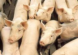 USDA patents method to reduce ammonia emissions