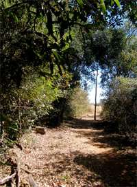 Forest edge reveals habitat loss in Madagascar
