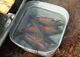 Warmer summers could shrink trout populations