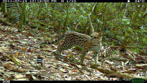 WCS photo of rare cat in Bolivia wins BBC prize