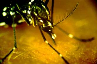 West Nile outbreak--more questions than answers