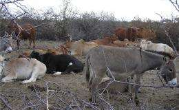 Wildlife and cows can be partners, not enemies, in search for food
