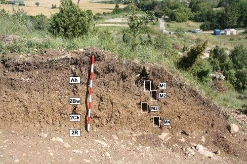1,000-year-old vineyards discovered