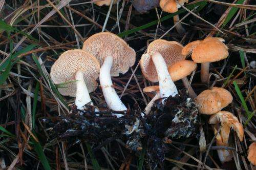 2 new species of mushroom documented in the Iberian Peninsula
