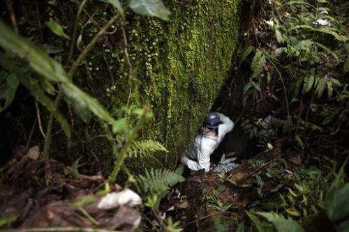 Alarm over vanishing frogs in the Caribbean