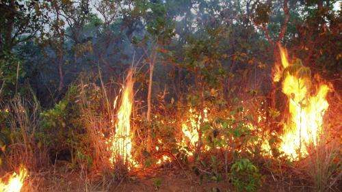 Amazon forest fire risk to increase in 2013