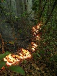 Amazon wildfires threaten bird communities