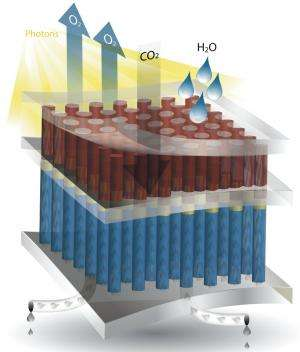 Artificial photosynthesis to make plants green with envy