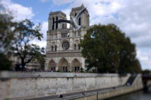 A seagull flies in front of Notre-Dame de Paris cathedral on September 19, 2011 in Paris