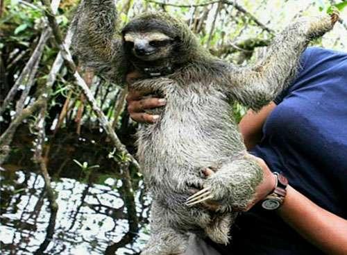 Attempted live sloth export sparks international conservation incident