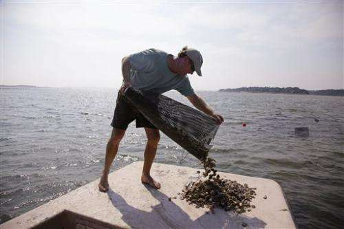 Bacterial outbreak roils Mass. oyster industry