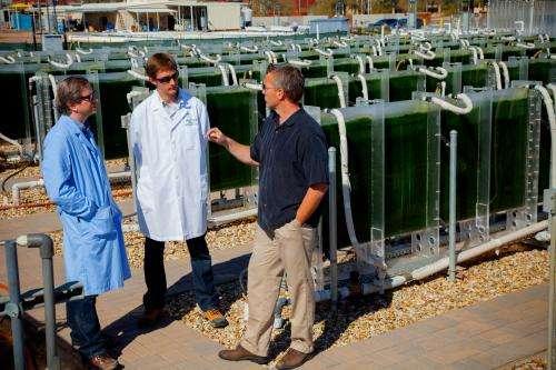 Better monitoring and diagnostics tackle algae biofuel pond crash problem