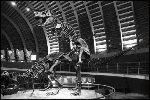 Big bang theory: How did dinosaurs have sex?