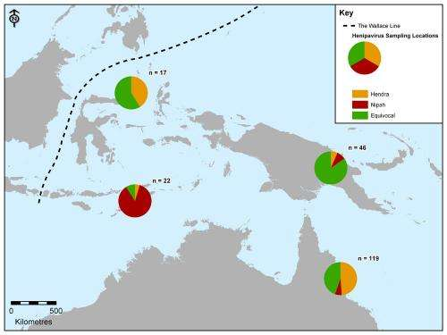 Biogeographic barrier that protects Australia from avian flu does not stop Nipah virus